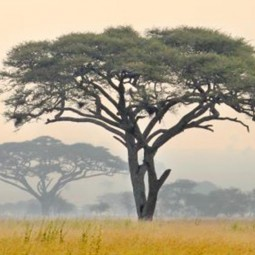 Rituel Sabi Sabi en Terre d'Afrique